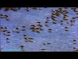 BBC «Прогулки с монстрами будущего (1) - Ледниковый период» (Документальный, 2002)